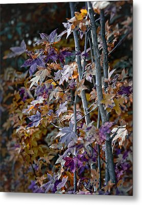 Seasonal Changes Metal Print by Michael Putnam