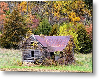 Seasoned With Age In Fall Metal Print