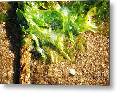 Seaweed And Rope Metal Print by HD Connelly