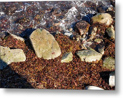 Seaweed By The Shore Metal Print