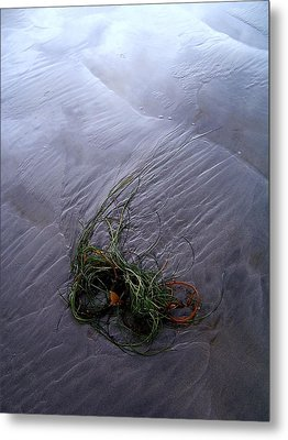 Metal Print featuring the photograph Seaweed Delivery by Peter Mooyman