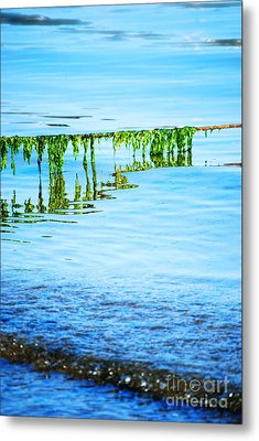 Seaweed Metal Print by HD Connelly