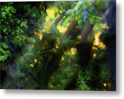 Metal Print featuring the photograph Secret Forest by Richard Piper