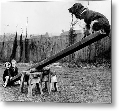 See-saw Dog Metal Print by Fox Photos