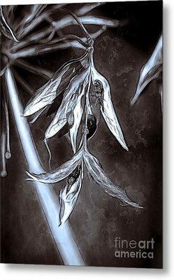 Seeds And Seedpods Metal Print by Judi Bagwell