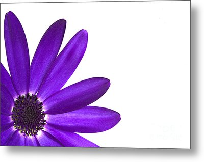 Senetti Deep Blue Metal Print by Richard Thomas