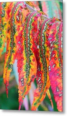Sensuous Sumac Metal Print by Doris Potter