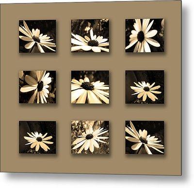 Sepia Daisy Flower Series Metal Print by Sumit Mehndiratta