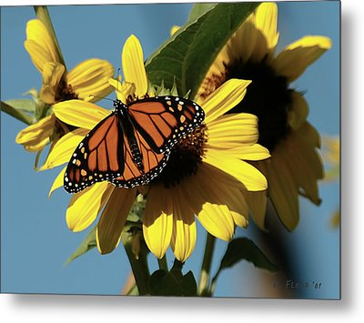September Visit Metal Print by Michael Flood