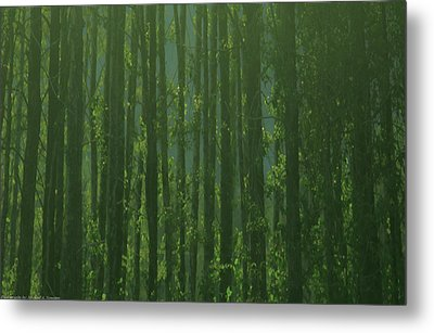 Seward Woods Metal Print by Michael Nowotny