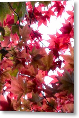 Shades Of Autumn Metal Print by Debra Collins