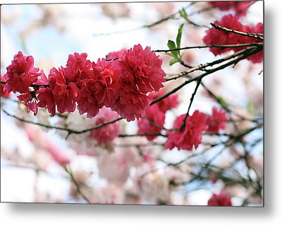 Shades Of Pink Blossom Metal Print by photo by Marcia Luly