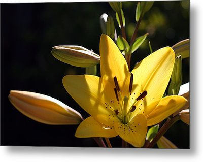 Shadow Lilly Metal Print by Wendi Curtis