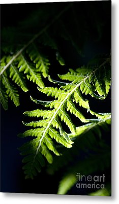 Shadow On Leaf -7 Metal Print