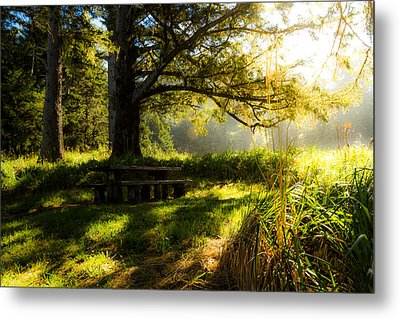 Shadowplay Metal Print by Randy Wood