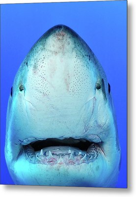Shark Metal Print by Don Carpenter of eurisko Photography