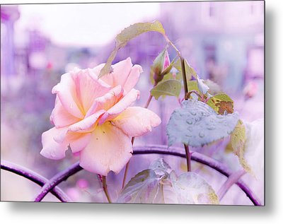 She Like The Ghost Beside Me. Scottish Rose Metal Print by Jenny Rainbow