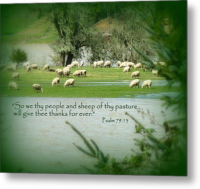Sheep Grazing Scripture Metal Print by Cindy Wright