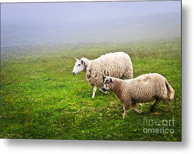 Sheep In Misty Meadow Metal Print