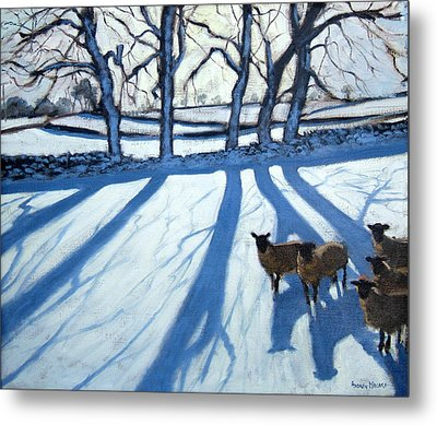 Sheep In Snow Metal Print by Andrew Macara