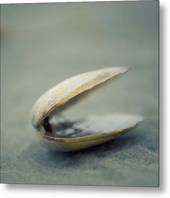 Shell Metal Print by Jill Ferry Photography