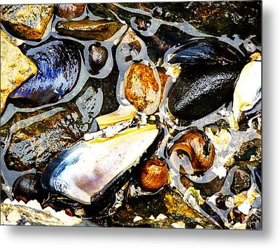 Metal Print featuring the photograph Shells by Kelly Reber