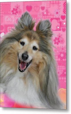 Sheltie Smile Metal Print by Christine Till