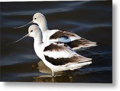 Shore Birds Metal Print by Paulette Thomas