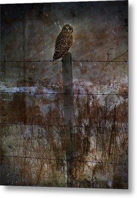 Short Eared Owl Metal Print by Empty Wall