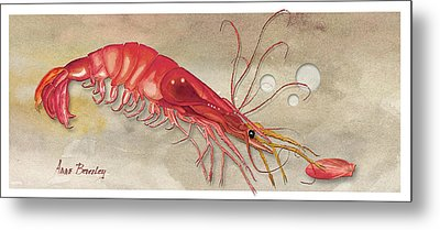 Metal Print featuring the painting Shrimp With Red Shell by Anne Beverley-Stamps