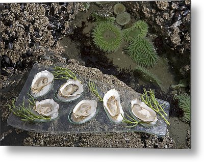 Shucked Oysters Sit On A Platter Next Metal Print by Taylor S. Kennedy
