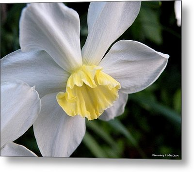 Shy Daffodil Metal Print
