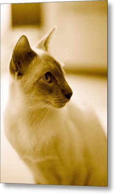 Metal Print featuring the photograph Siamese Feline by Lenny Carter