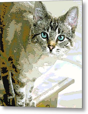Siamese Mix Kitten Metal Print by Dorothy Walker