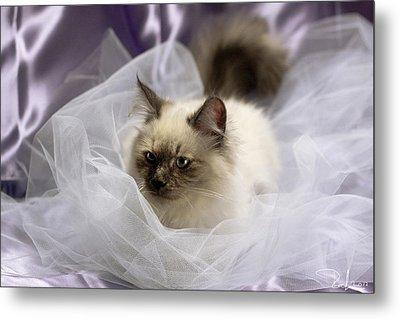 Siberian Kitty On Lilac Metal Print by Raffaella Lunelli