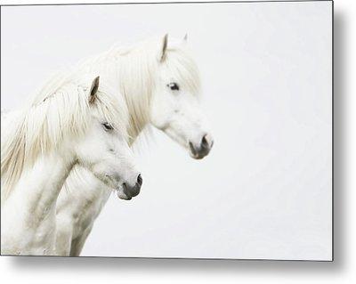Side Face Of Two White Horse Metal Print by Gigja Einarsdottir