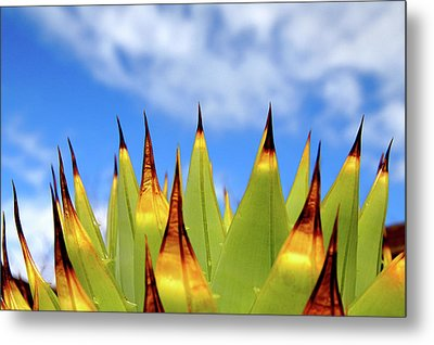 Side View Of Cactus On Blue Sky Metal Print by Greg Adams Photography