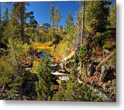 Sierra Nevada Fall Beauty At Lily Lake Metal Print