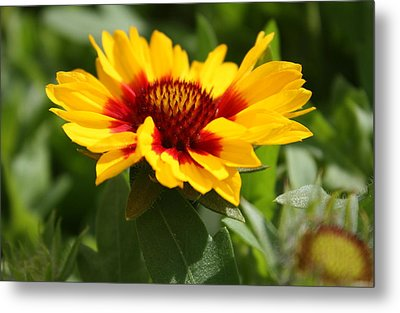 Metal Print featuring the photograph Signs Of Summer by Robin Regan