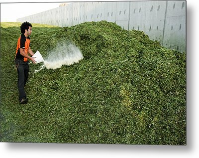 Silage Fermentation Metal Print by Photostock-israel