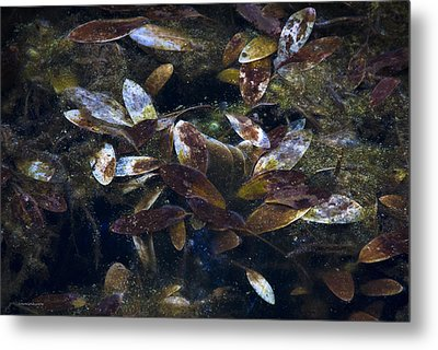 Silent Fall Metal Print by Ron Jones