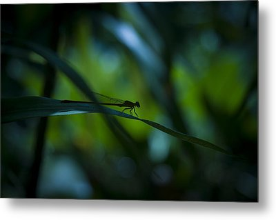 Silhouette Of A Damselfly Metal Print
