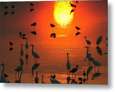 Silhouetted Wading Birds Feed Metal Print by George Grall