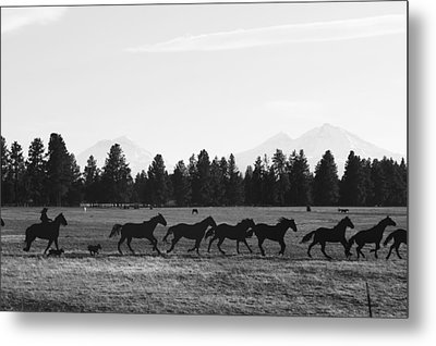 Silhouettes Metal Print by Angi Parks