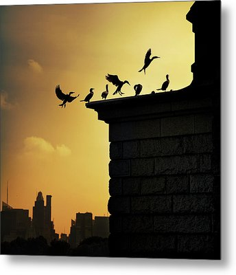 Silhouettes Of Cormorants Metal Print