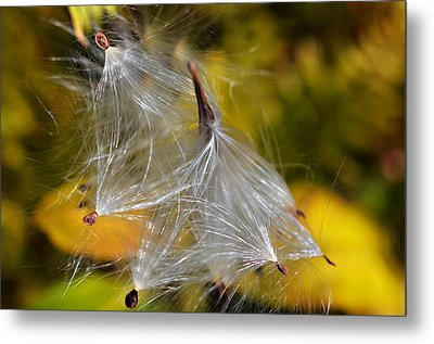 Silky Autumn Metal Print by Susan Leggett