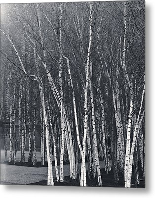 Silver Trees Metal Print by Lenny Carter