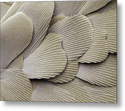 Silverfish Scales, Sem Metal Print