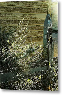Metal Print featuring the photograph Silverleaf In Morning Sun by Louis Nugent