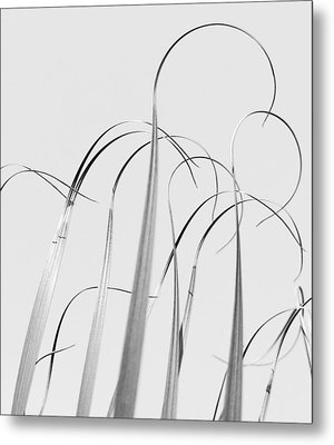 Silvery Soaring Slivers Of Grass Metal Print